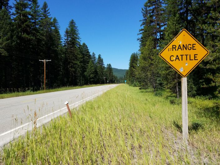 An Adventure Cycling Glacier-Waterton Parks tour: a sign that made me laugh: stRANGE CATTLE.