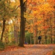 Natchez Trace Fall - Van