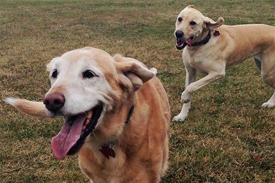 Green Hill Org Adopt Dog