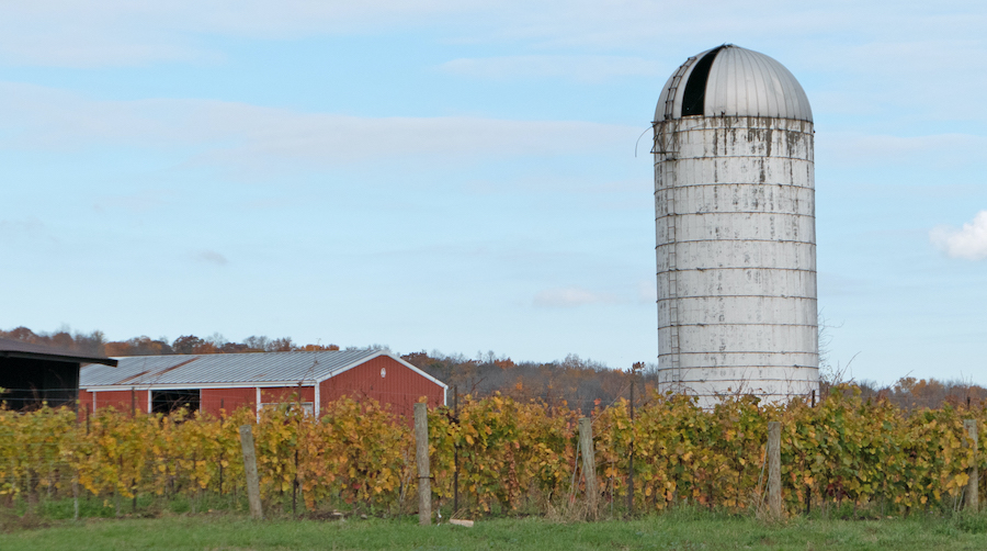 Farm silo in the background with grape vines in the foreground.