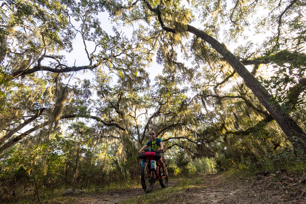 Spanish moss and solitude while bikepacking on Cumberland Island