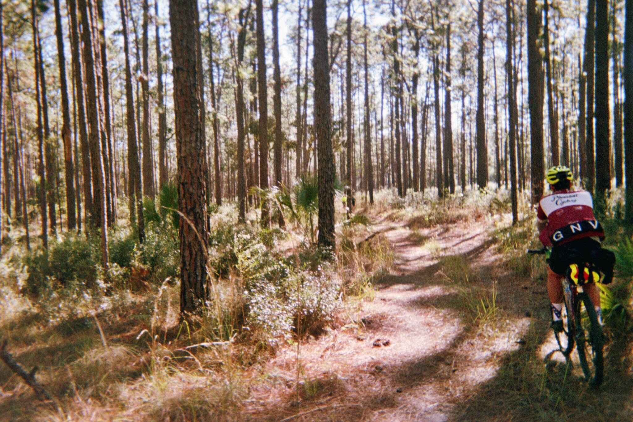 Ocala National Forest on film by Ana Fajardo