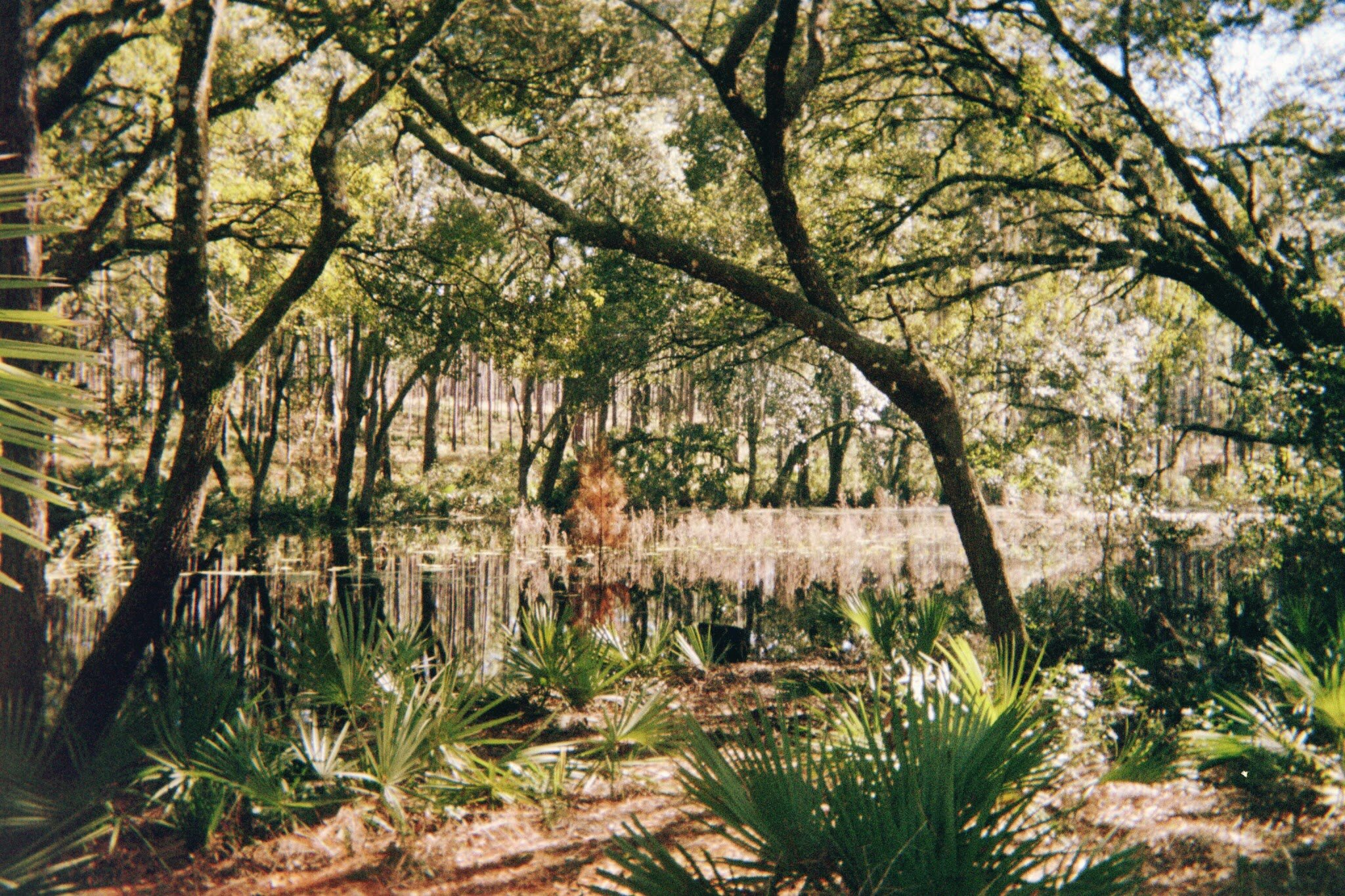 Ocala National Forest secluded pond