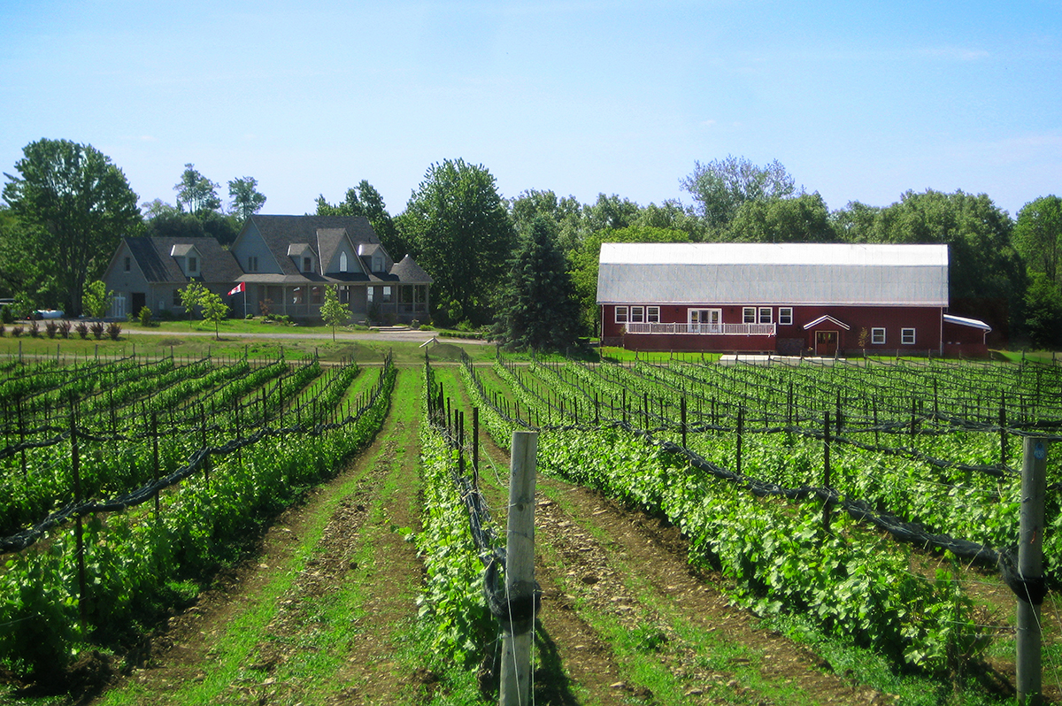 Vineyards in Prince Edward County, Ontario