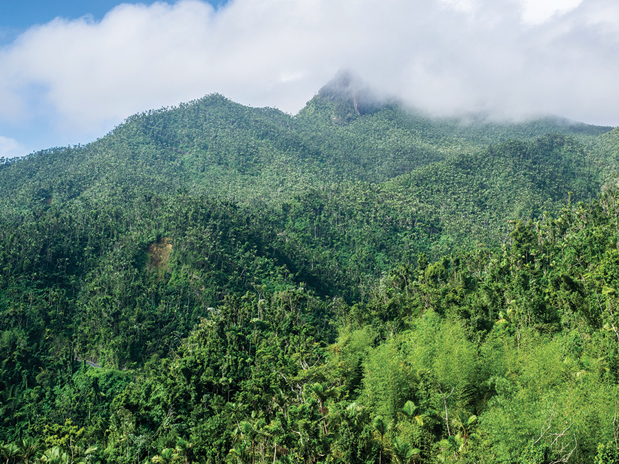 El Yunque National Forest by Saara Snow