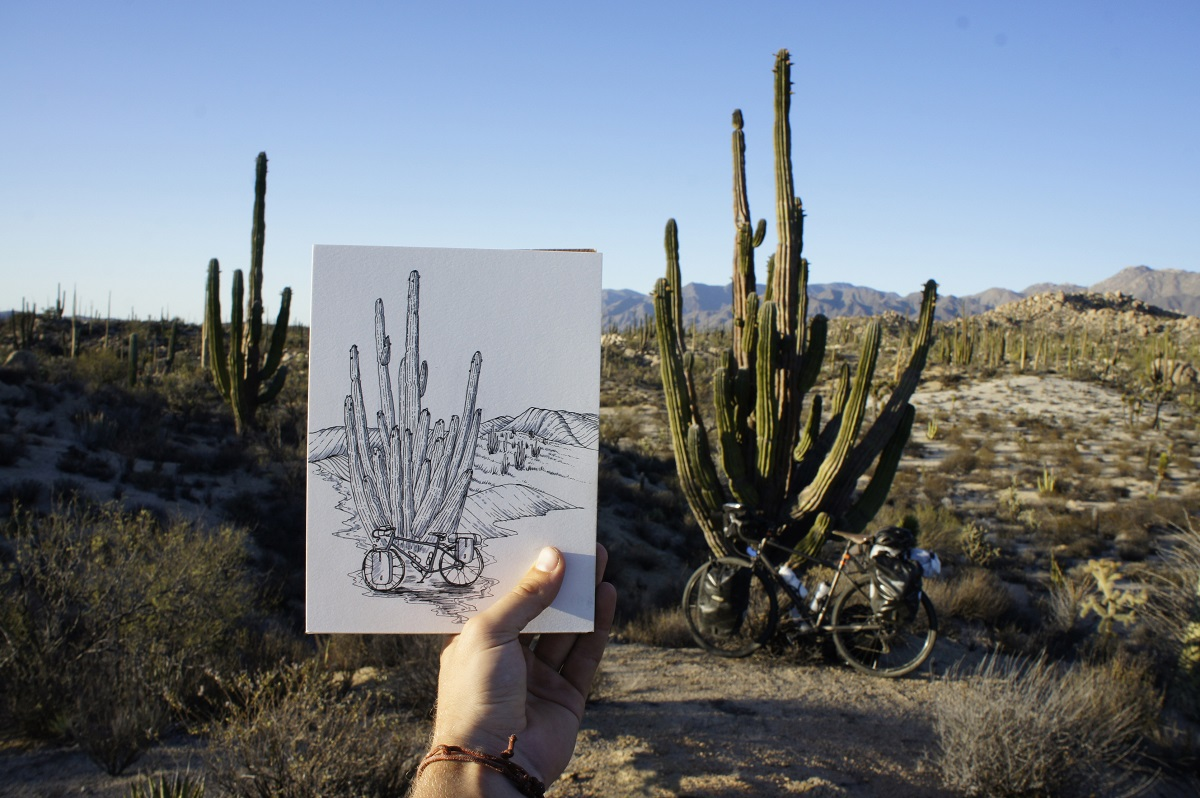 Parker Jones cactus bike drawing