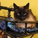 Cats in the Bike Industry