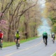 National parks promote bicycling to expand transportation options